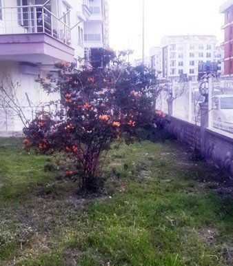 properties for sale in antalya turkey23